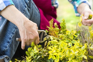 trees unlimited mass pruning services