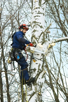 trees unlimited tree removal services