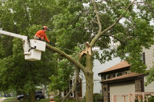 trees unlimited mass tree care and trimming  services